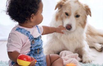 Meu bebê nasceu! vou ter que doar o animal de estimação?